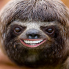 HappyLittleSloth